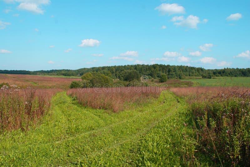 Beautiful green field royalty free stock photography