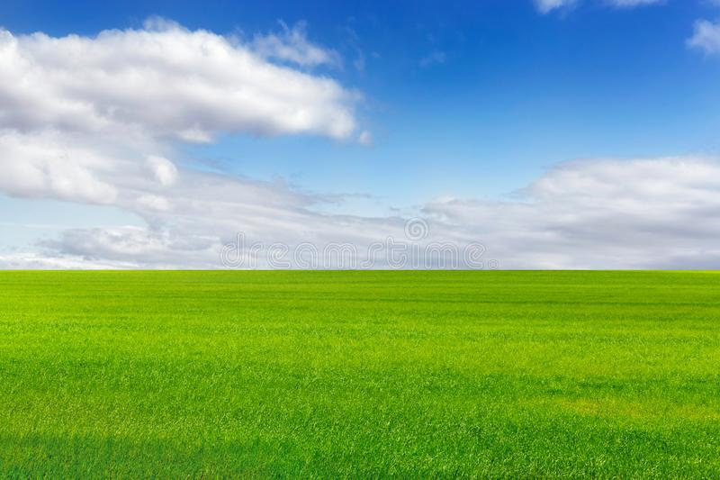 Beautiful green field and bright blue sky with light clouds stock photos