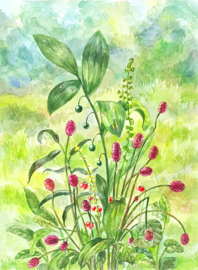Beautiful green field with bush of healing herbs. Watercolor ill vector illustration