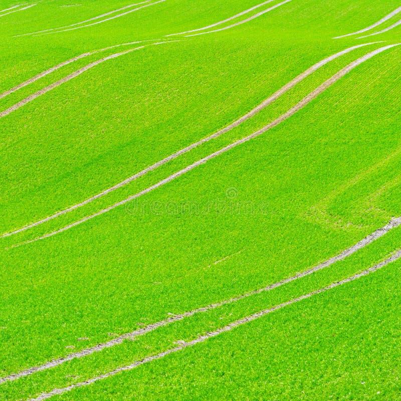 Beautiful Green Field Pattern Stock Image