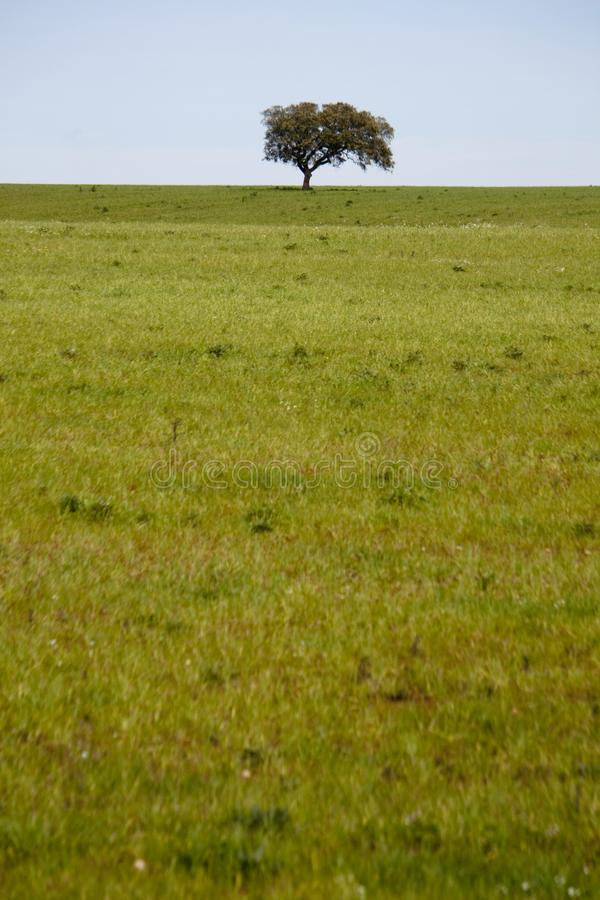 Beautiful green field. View of a beautiful green hill with a lonely tree on the middle royalty free stock photos