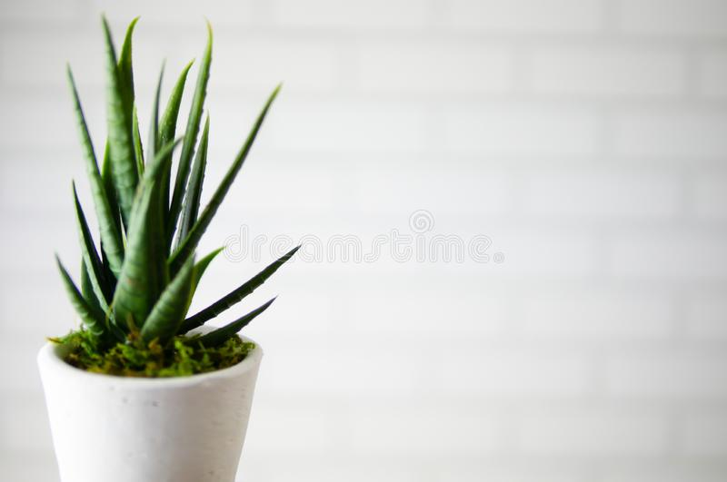 Beautiful green flowerpot in front of brick pattern wallpaper in the modern office or home stock images