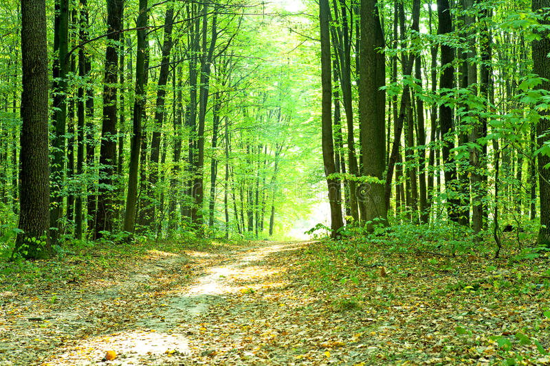 Download Beautiful green forest stock image. Image of environment - 28801607
