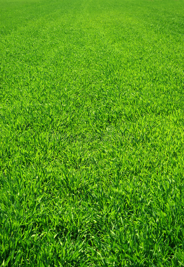Download Beautiful Green Grass Stock Photography - Image: 2306782