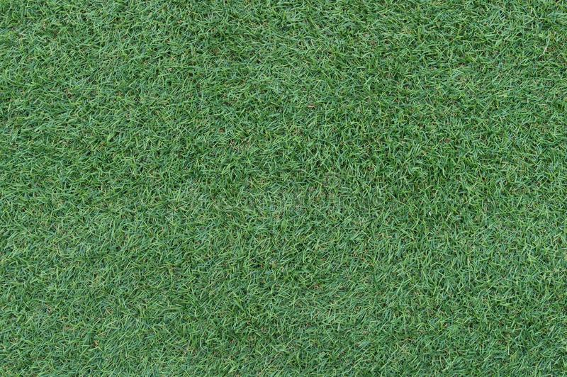Beautiful green grass background, texture, pattern. royalty free stock photos