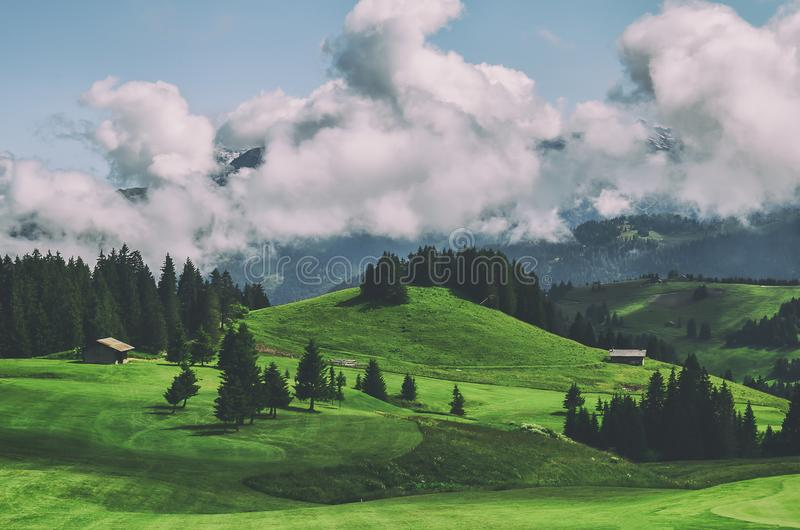 Beautiful green grass on a golf field with mountain and blue sky stock image