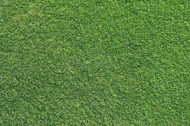 Beautiful green grass texture from golf course royalty free stock image