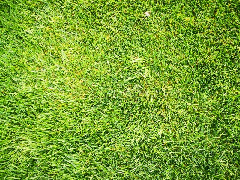 Beautiful Green Grass Texture, Perfect Autumn Natural Grass royalty free stock photo