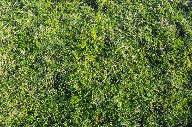 Green grass textured background and pattern from golf course royalty free stock photo