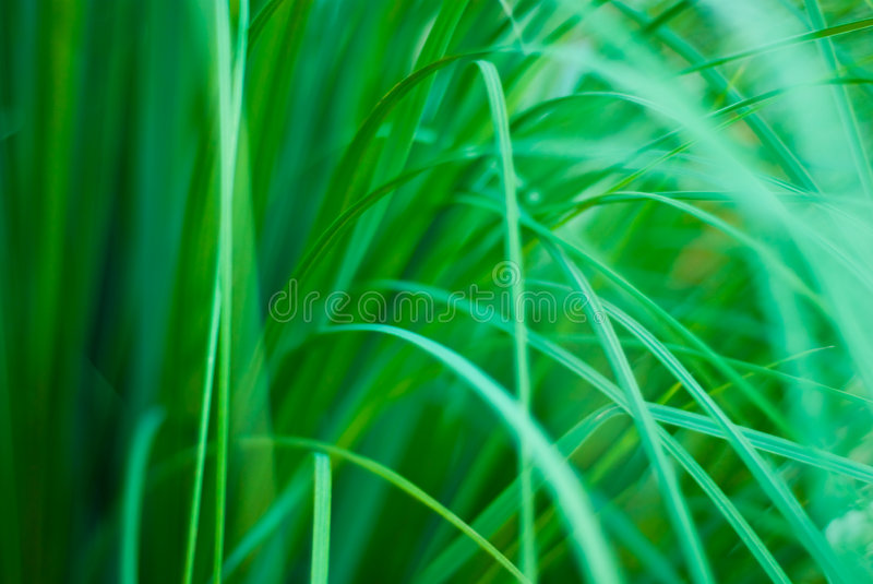 Download Beautiful Green Grassy Abstract Background Stock Image - Image: 4484217