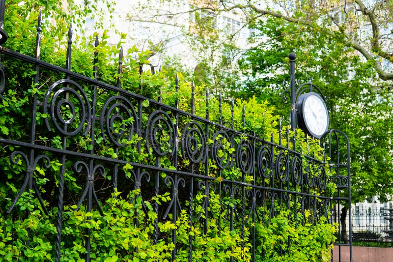 Beautiful green hedge, fence with plants in the springtime stock photography