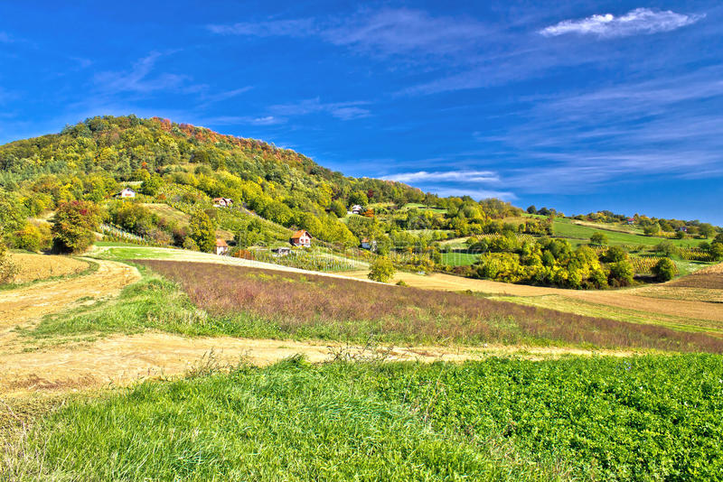 Beautiful green hill with vineyard cottages stock photo