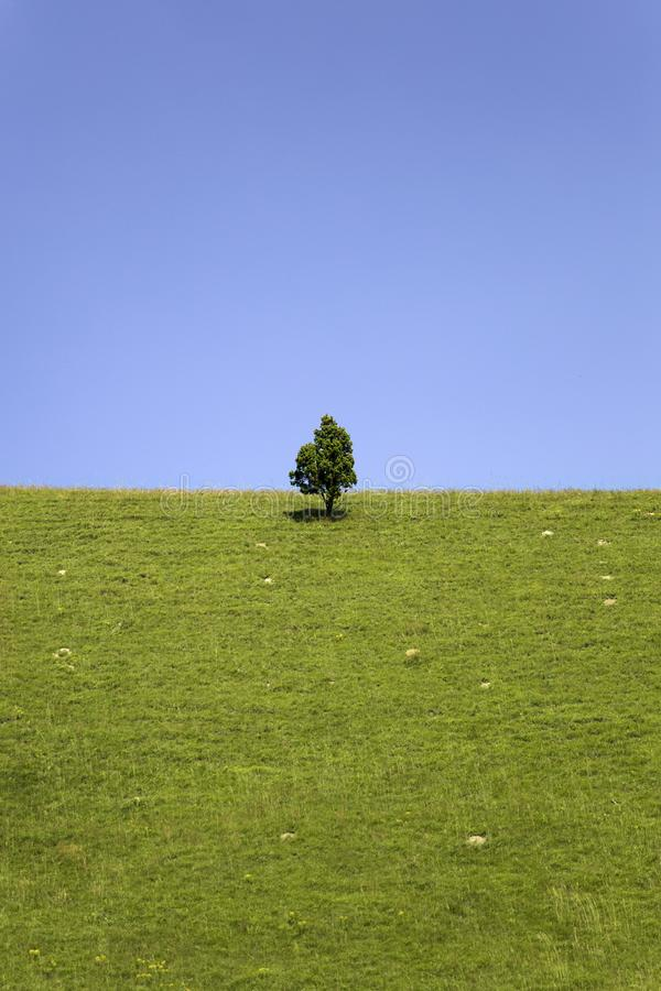 Beautiful green hills and lonely tree in springtime royalty free stock photos