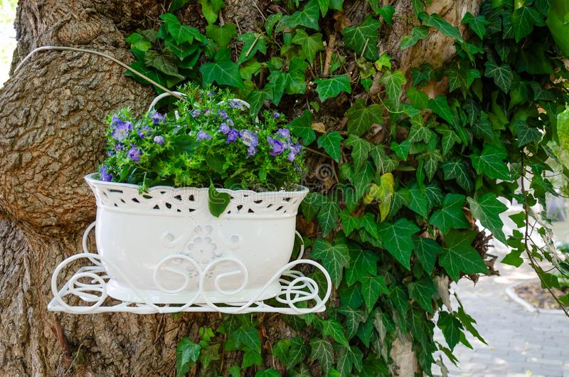 Beautiful green ivy climbing up the huge tree trunk and a white flowerpot with purple flowers. Scenic natural background. Closeup royalty free stock photo