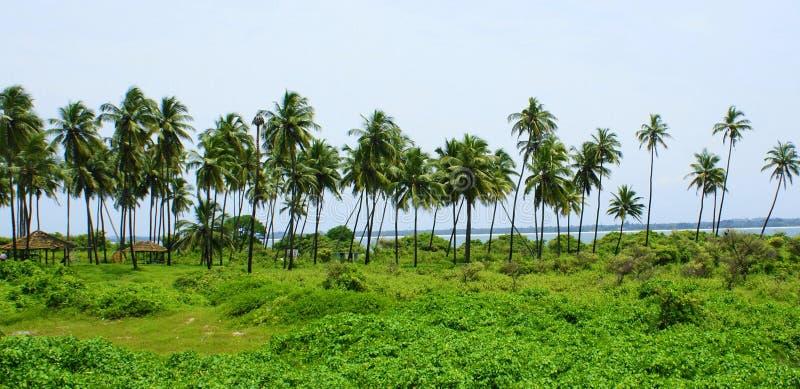 Beautiful green landscape stock image