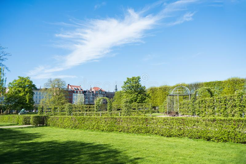 beautiful green lawn with trees and bushes in botanical garden royalty free stock photos