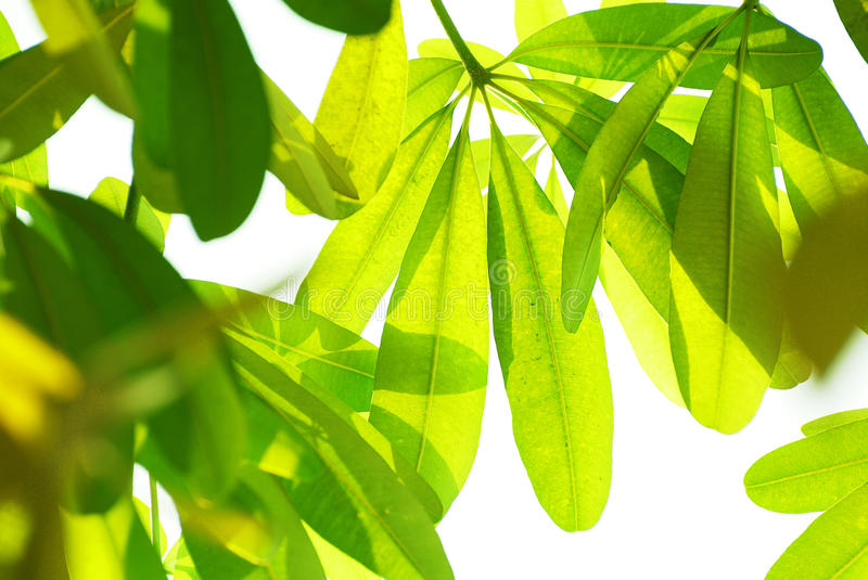 Download Beautiful green leaves stock photo. Image of green, light - 19241650
