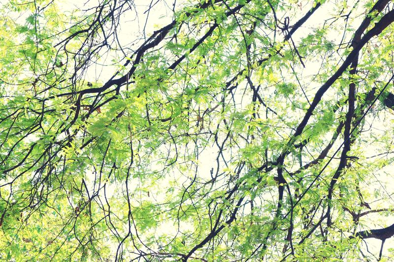 Beautiful green leaves in nature, warm colors, relaxing  For textured abstract backgrounds royalty free stock images