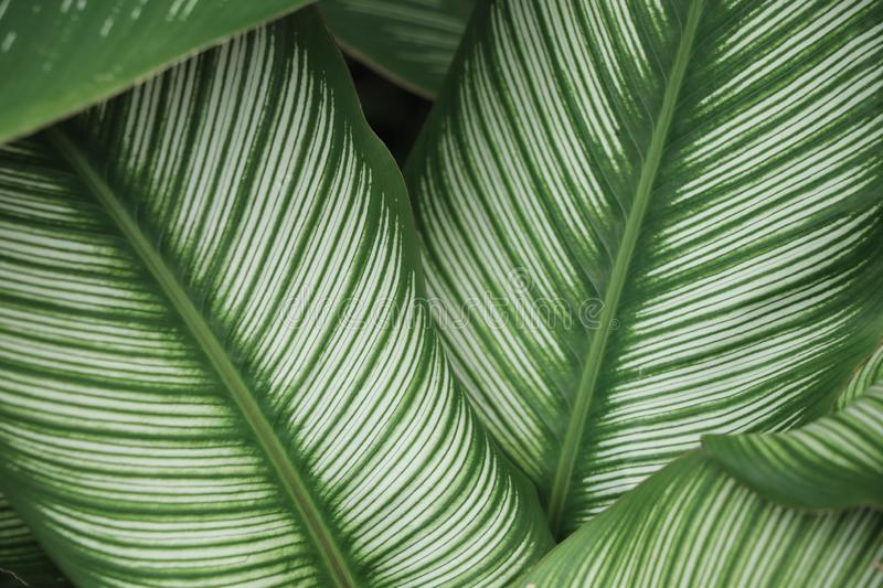 Beautiful  green leaves textured with shape fresh backdrop stock images