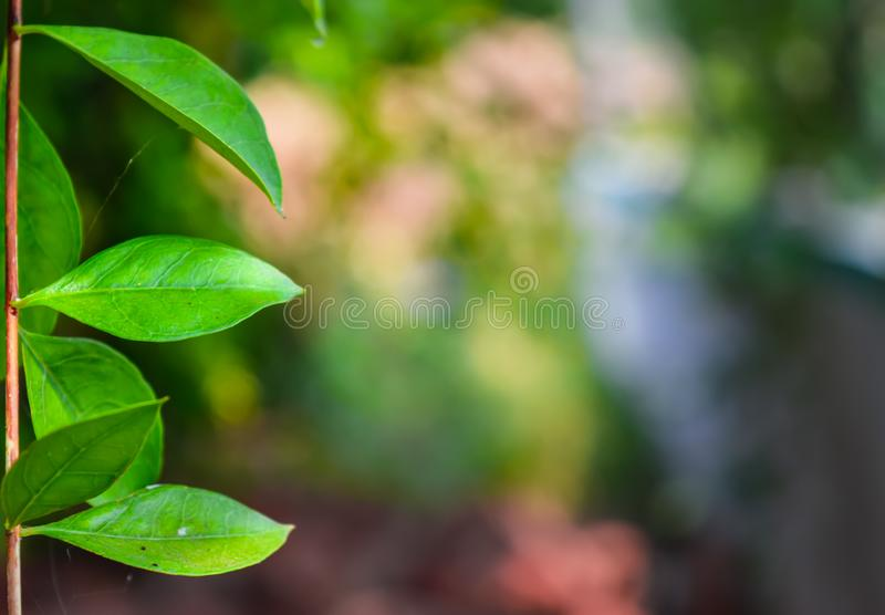 Beautiful green leaves written text side,green leaves pattern background,.Green leaves color tone dark,photo concept nature and. Plant, hipster, organic, lay stock image