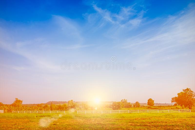 Beautiful green meadow with blue sky and sun background. stock image