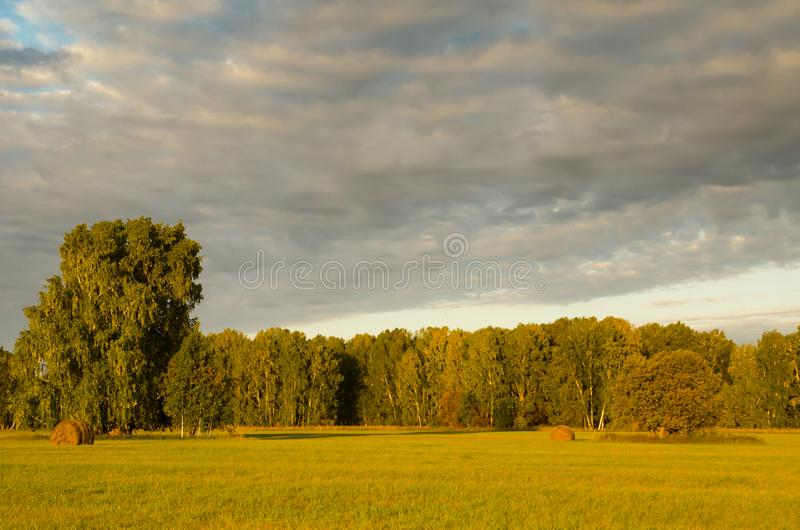 Beautiful green meadow with haystacks in the background of a for royalty free stock photo