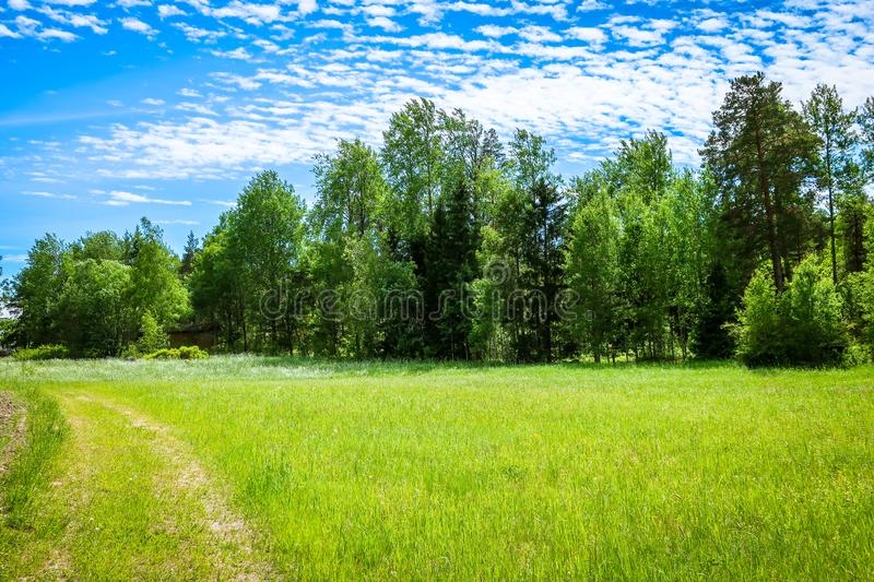 A beautiful green meadow in summer with tall grass royalty free stock photography