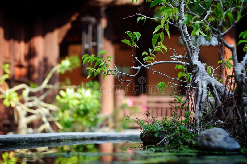 Beautiful green miniature bonsai tree in pond. royalty free stock images