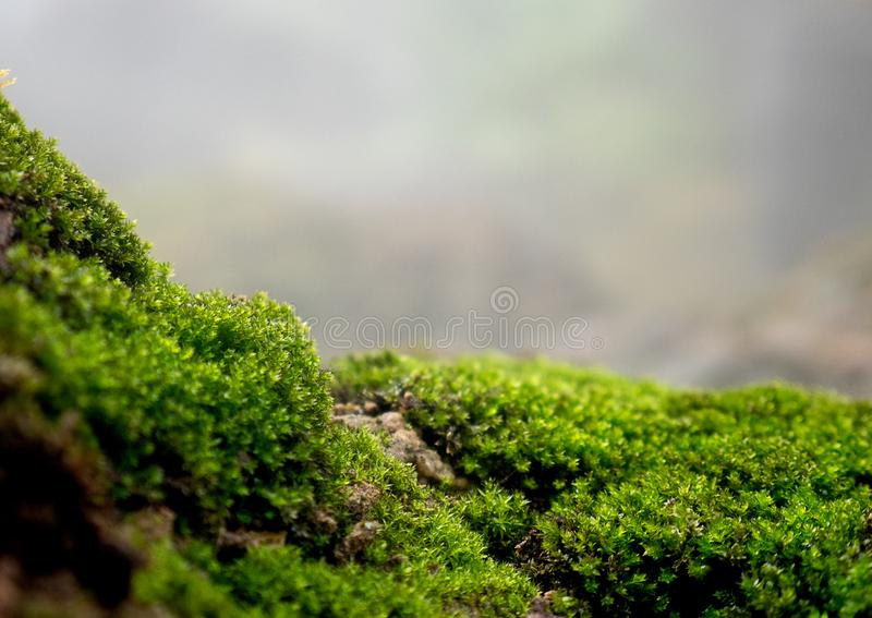 Beautiful green moss on the floor, moss closeup, macro. Beautiful background of moss for wallpaper stock photos