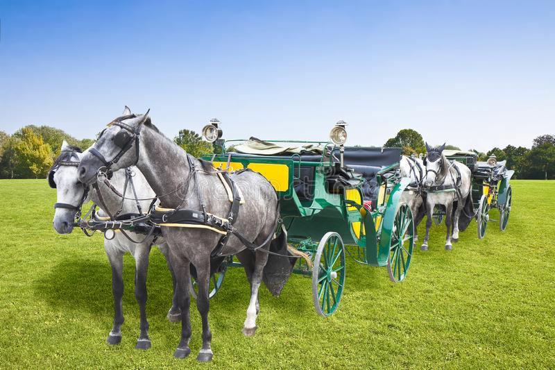 Beautiful green mowed lawn with trees and sky on background with two old carriages pulled by a couple of horses - concept image royalty free stock images