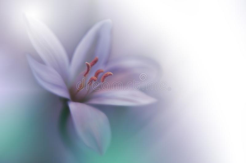 Beautiful Green Nature Background.Abstract Artistic Wallpaper.Art Macro Photography.Spring Flowers.Amazing Floral Photo.Ecology. royalty free stock image