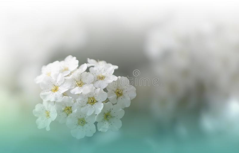 Beautiful Green Nature Background.Copy Space.Artistic Wallpaper.Natural Macro Photography.Spring,white flowers.Floral Art.Purity. Incredibly beautiful Nature stock image