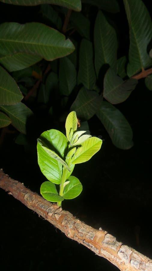Night nice plant royalty free stock photos