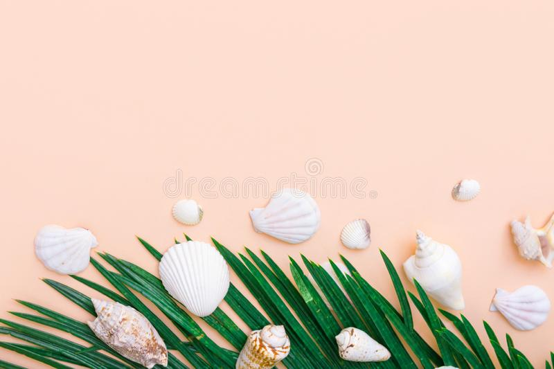 Beautiful green palm leaf white sea shells on pastel pink wall background. Elegant summer tropical nautical creative concept royalty free stock photo