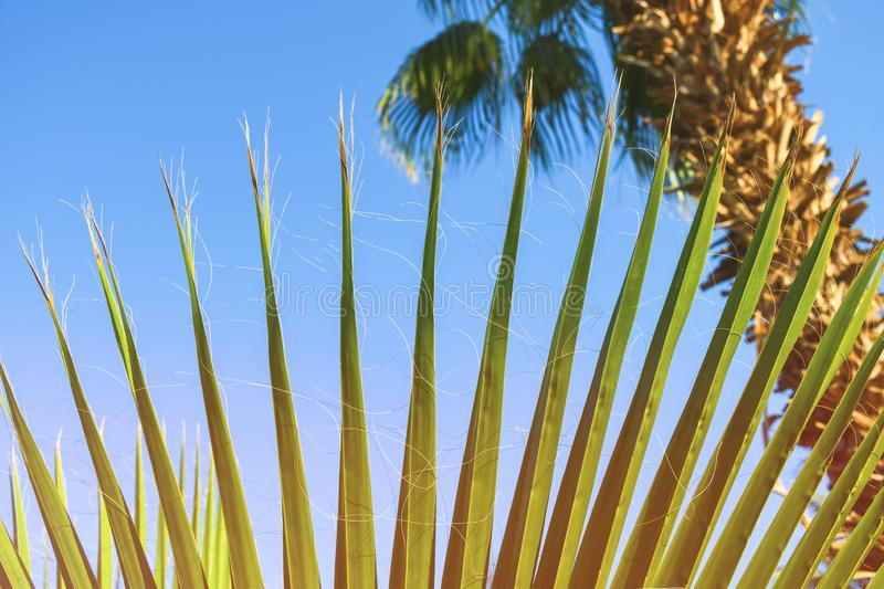 Beautiful green palm tree leave texture close up details. Pattern with nice straight lines stock photography