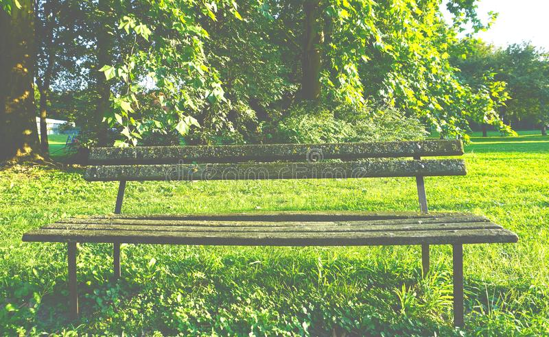 Beautiful green park with bench covered with moss royalty free stock images