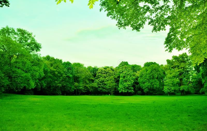Beautiful green park with blue sky stock image