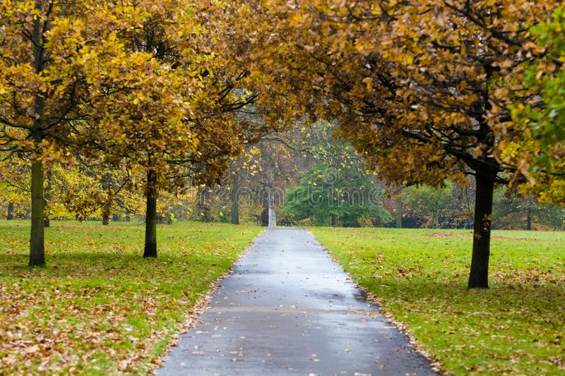 Beautiful green park Public park with green grass royalty free stock image