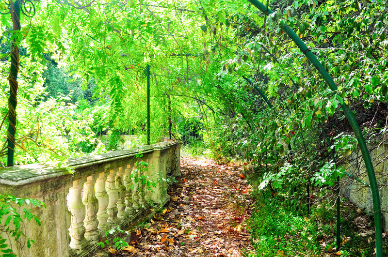Download Beautiful green park stock photo. Image of morning, alley - 39501804