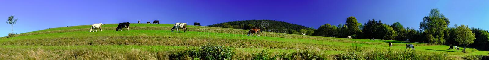Beautiful green pasturage in Alsace, France. Panoramic view royalty free stock photo