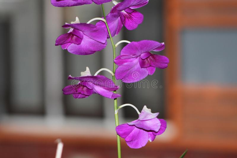 A beautiful green and purple flower royalty free stock photography