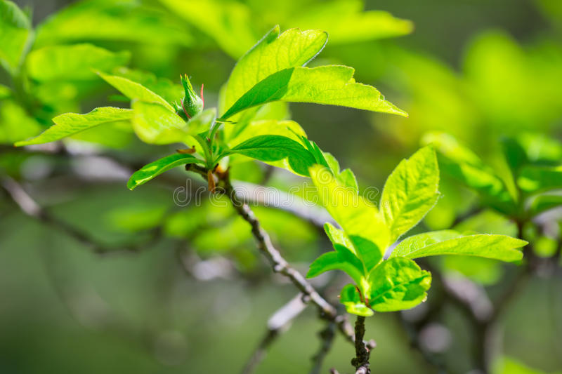 Beautiful Green Tree Leaves Stock Photo
