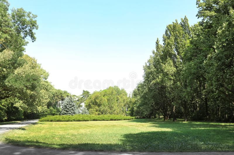 Beautiful green trees in botanical garden. On sunny day royalty free stock images