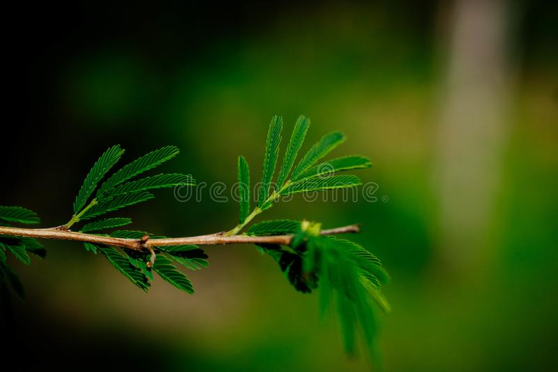 Beautiful green twig of a tree stock photography