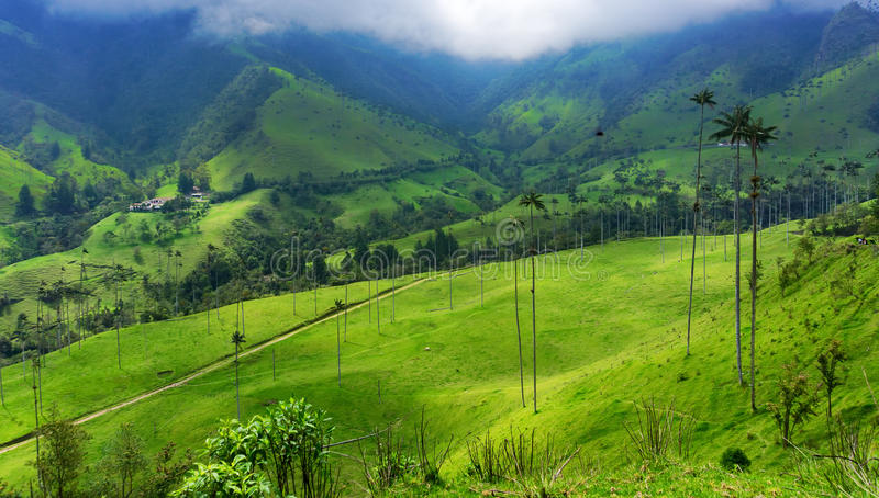 Beautiful Green Valley. And wax palm trees in Cocora Valley near Salento, Colombia stock images