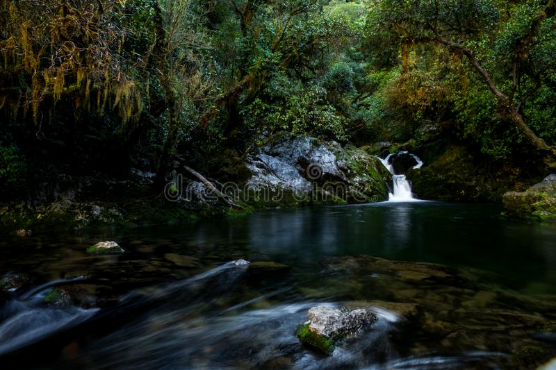 Beautiful greenery nature and stream of the rainforest. I stock photos