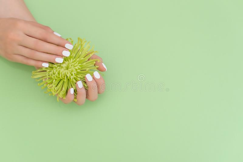 Beautiful groomed woman`s hands with white nails on the light gray background. Nail varnishing in white color. Manicure, pedicure stock photography
