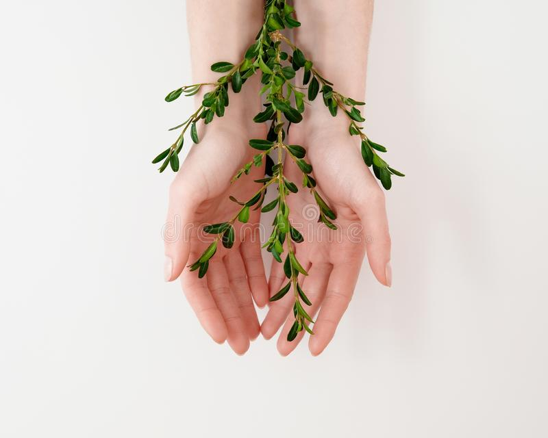 Beautiful groomed woman`s palm hands with green leaves on the table. Natural organic cosmetic, skin care beauty, fresh look. The royalty free stock photos