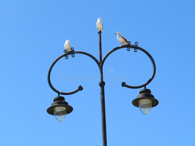 Beautiful gulls of great beauty and nice color mugging for the camera stock image