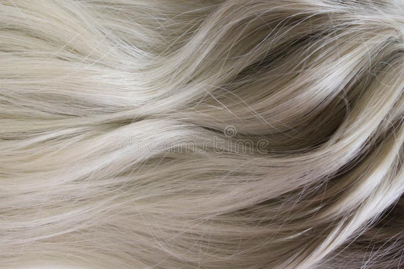 Beautiful hair. Long curly blond hair. Coloring with gradient from blonde to light brown. stock image